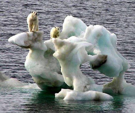 Canadian Polar Bears Stranded Ice Photo